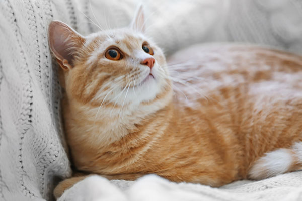 Orange cat on couch looking to his owner