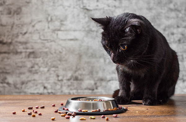 why do cats take their food out of the bowl?