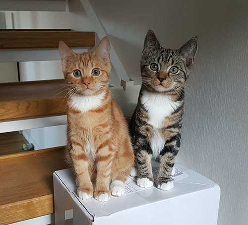 two cats on white box