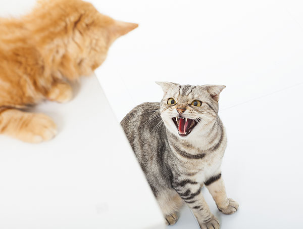 Why do my cats fight at night?
