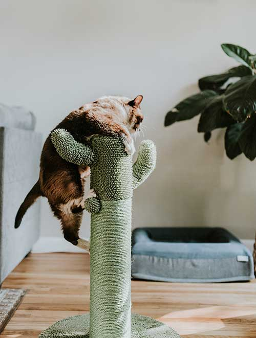 cat jumping on scratching post